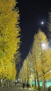 画像:銀杏夜