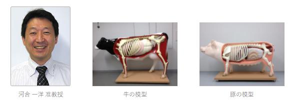 画像:麻布大学の参加型獣医学・畜産学教育のための動物模型